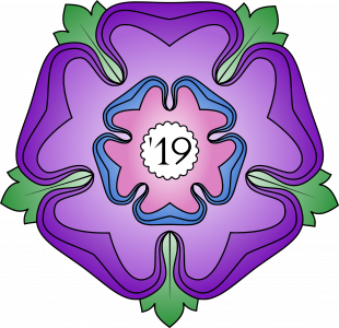 A Lancaster Rose in purple pink and blue